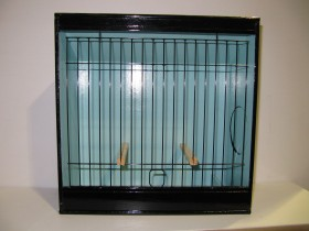 Lizard Canary Show Cage